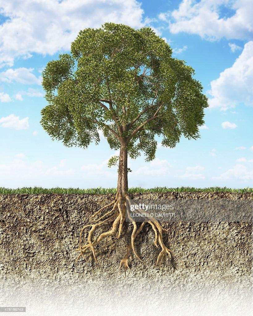 Tree, artwork : stock illustration
