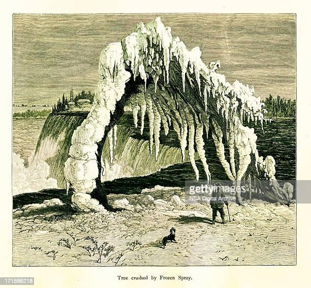 Tree crushed by frozen spray at the Niagara Falls