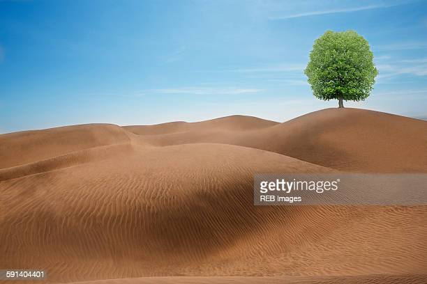 tree growing in desert sand dunes - 乾燥気候点のイラスト素材/クリップアート素材/マンガ素材/アイコン素材