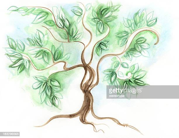 26 Bonsai Tree Drawing High Res Illustrations Getty Images