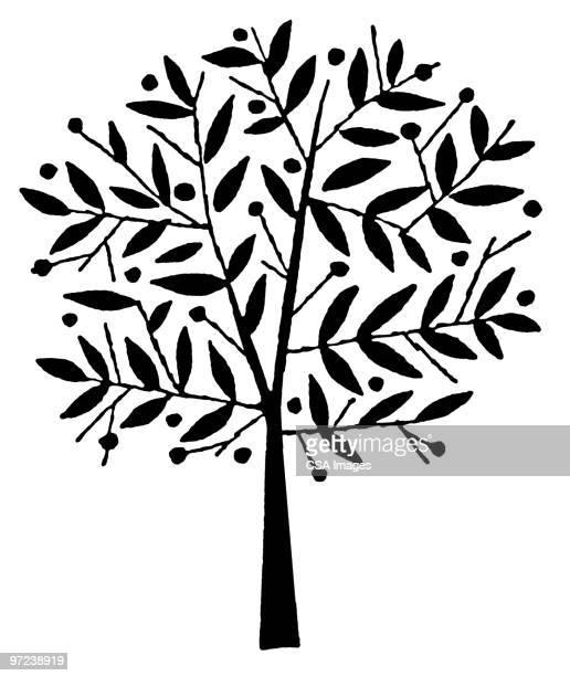 illustrations, cliparts, dessins animés et icônes de tree - olivier