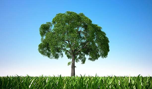 Tree In A Field, Artwork Wall Art