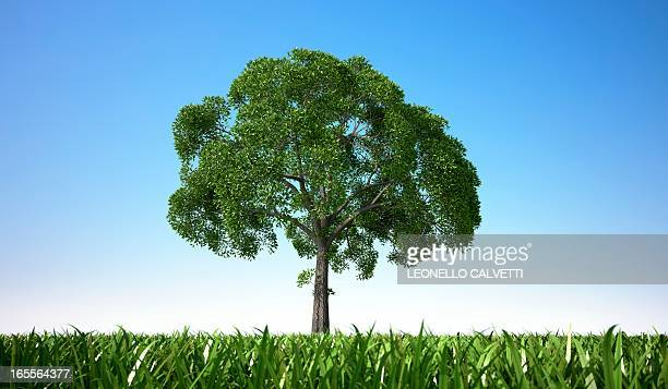tree in a field, artwork - low angle view stock illustrations