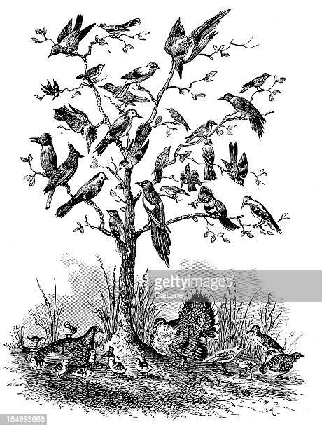 tree of birds - victorian engraving - engraved image stock illustrations, clip art, cartoons, & icons
