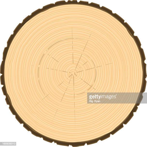 tree ring circle - log stock illustrations