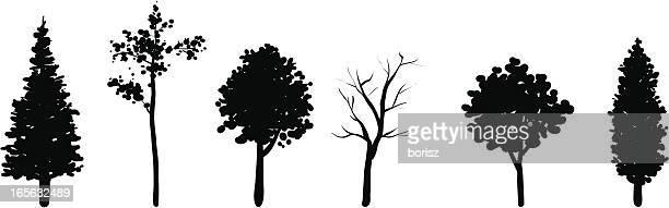 tree set - ash stock illustrations, clip art, cartoons, & icons