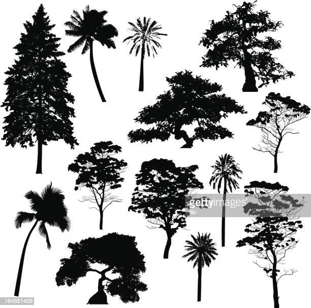 tree silhouette collection - branch plant part stock illustrations, clip art, cartoons, & icons