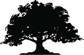Tree - Silhouette (vector)