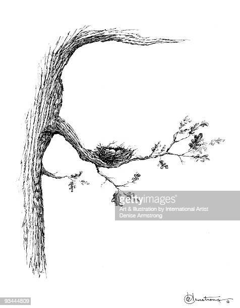 tree with nest - pen and ink stock illustrations