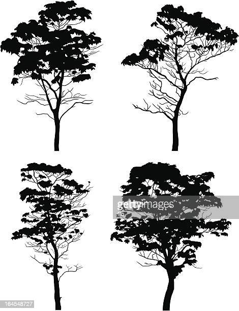 trees - ash stock illustrations, clip art, cartoons, & icons