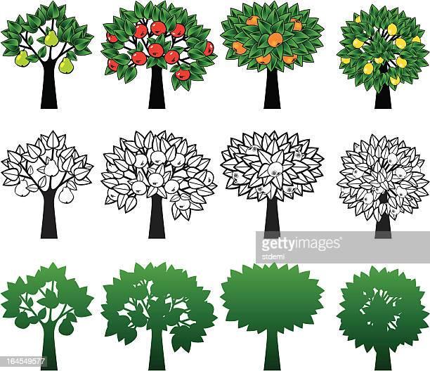 ilustrações de stock, clip art, desenhos animados e ícones de árvores - laranjeira