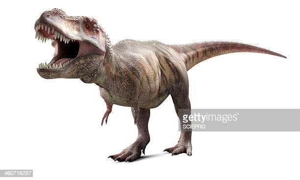 t-rex, artwork - paleontology stock illustrations