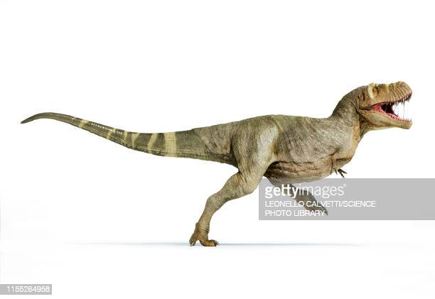 t-rex dinosaur, illustration - paleontology stock illustrations