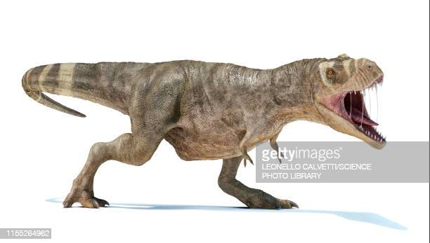 t-rex dinosaur, illustration - cretaceous stock illustrations