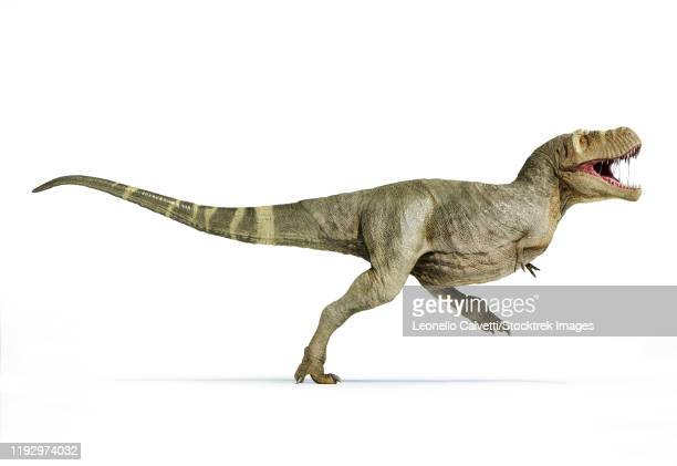 illustrations, cliparts, dessins animés et icônes de t-rex full body walking, isolated on white background. - full body isolated