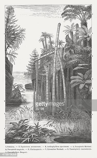Triassic plants, wood engraving, published in 1876