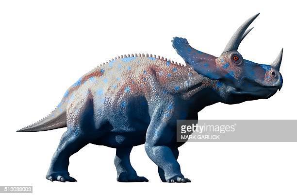 Triceratops dinosaur, artwork