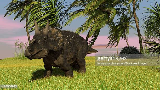 Triceratops roaming a tropical environment.