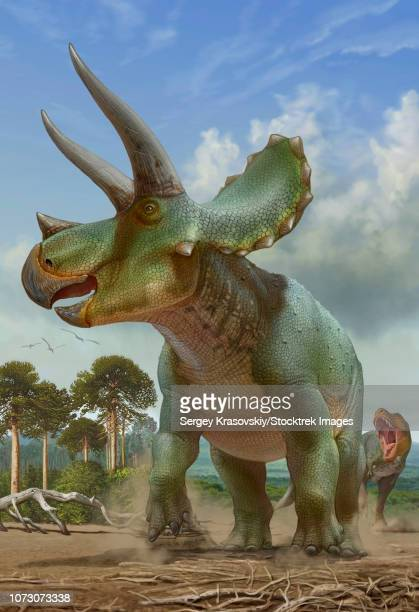 Triceratops running away from a T-rex chasing after it.