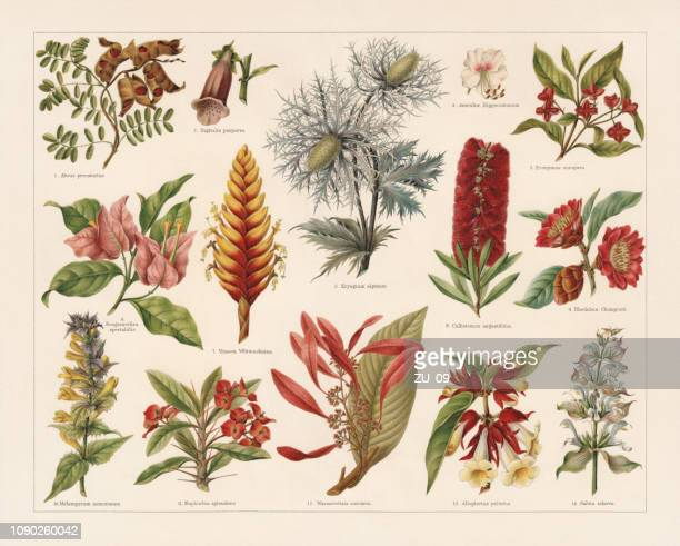 tropic, evergreen, and poisonous plants, chromolithograph, published in 1897 - lithograph stock illustrations