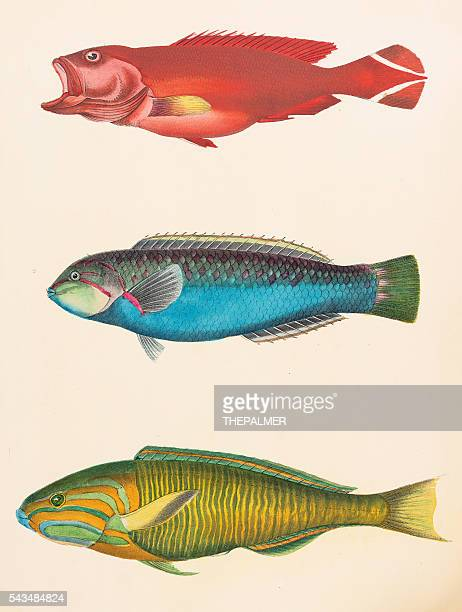 Asiática Tropical fishes ilustración 1856