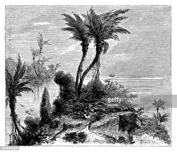 tropical climat - coconut palm tree stock illustrations, clip art, cartoons, & icons