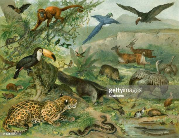 tropical forest with animals illustration - anteater stock illustrations