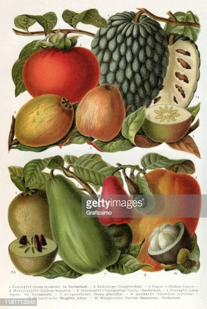 ilustrações de stock, clip art, desenhos animados e ícones de tropical fruits illustration 1895 - litografia