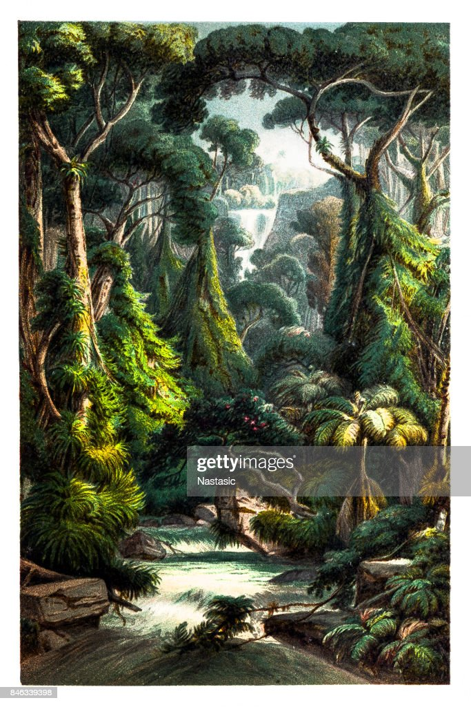 Tropical jungle Waterfall with Palm Trees ,Ferns and Lianas : stock illustration