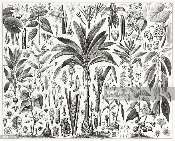 tropical plants engraving - tropical bush stock illustrations