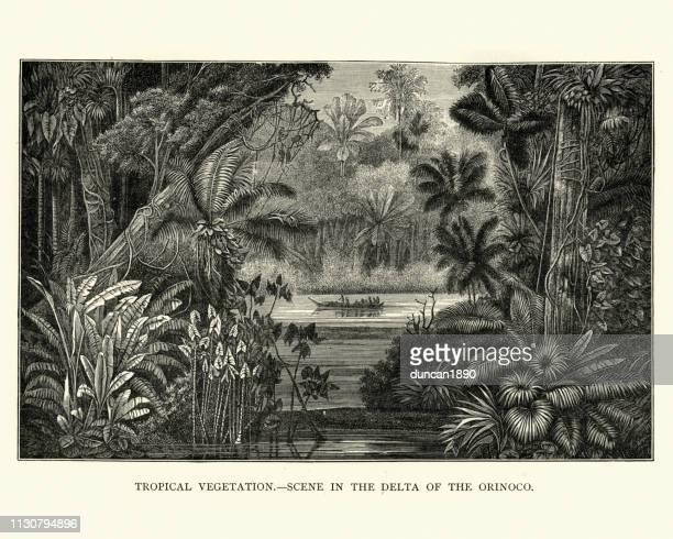 ilustraciones, imágenes clip art, dibujos animados e iconos de stock de escena tropical, delta del río orinoco, siglo xix - colombia