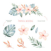 Tropical Wedding floral set.Beautiful soft floral collection
