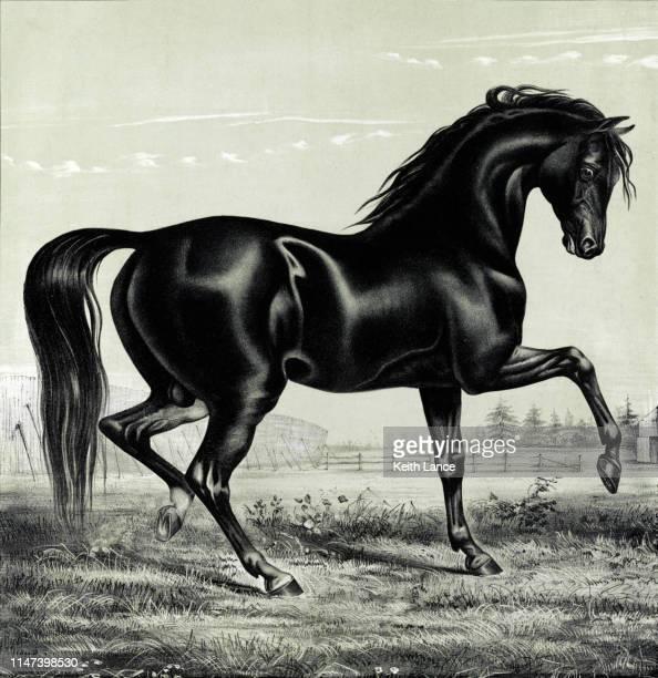 trotting black stallion - animal mane stock illustrations