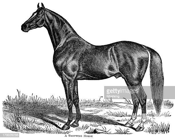 trotting horse engraving - horse stock illustrations