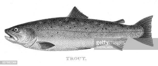 Trout engraving 1802