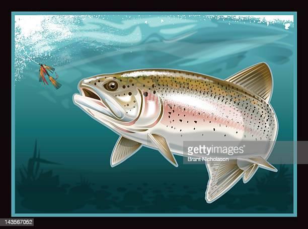 ilustraciones, imágenes clip art, dibujos animados e iconos de stock de trout going after fly in water - animal vertebrado