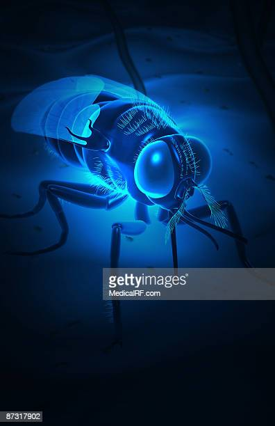tsetse fly - tsetse fly stock illustrations
