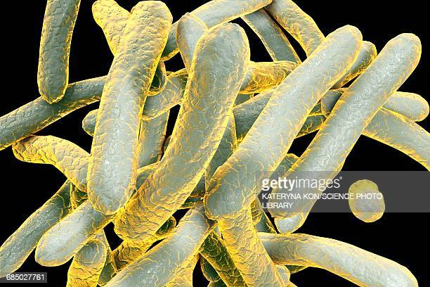 tuberculosis bacteria, illustration - malaria parasite stock illustrations