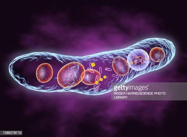 tuberculosis bacterium, illustration - leprosy stock illustrations