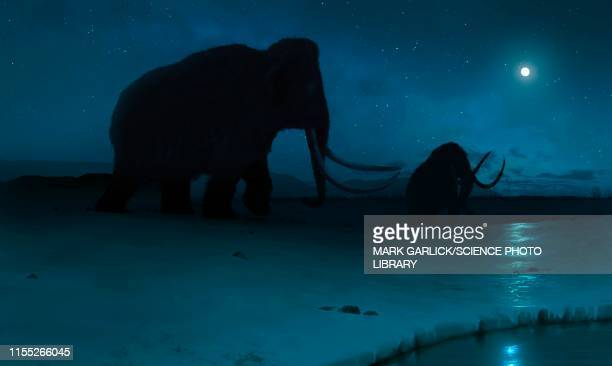 tundra mammoth, illustration - images of mammoth stock illustrations