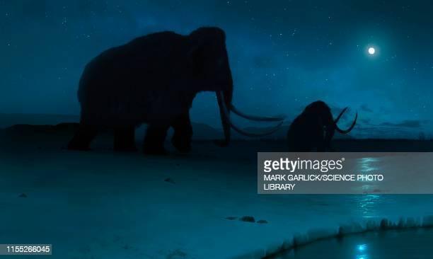 tundra mammoth, illustration - paleontology stock illustrations
