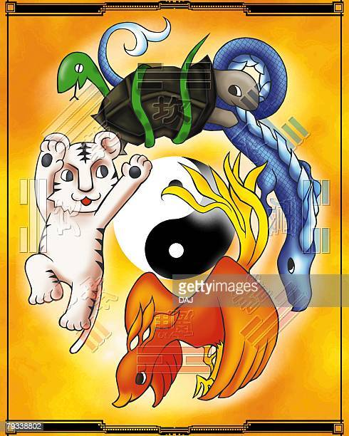 turtle, dragon, red chinese phoenix, and tiger around yin yang, front view, side view - phoenix mythical bird stock illustrations, clip art, cartoons, & icons
