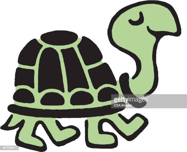 ilustraciones, imágenes clip art, dibujos animados e iconos de stock de turtle - tortugas
