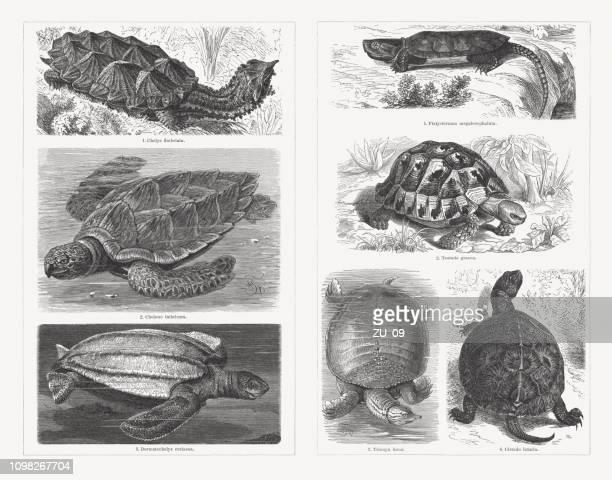 Turtles, wood engravings, published in 1897