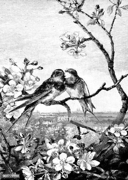 恋の枝に座っている 2 羽の鳥