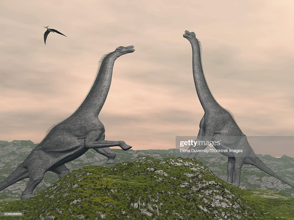 two brachiosaurus dinosaurs fighting stock illustration getty images