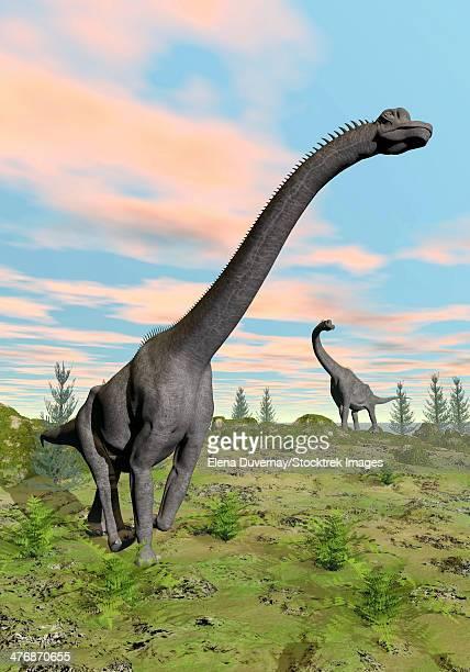 Two brachiosaurus dinosaurs in a prehistoric environment.