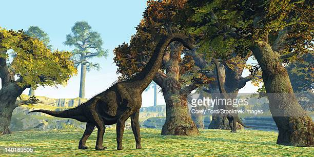 Two Brachiosaurus dinosaurs walk among large trees in the prehistoric era.