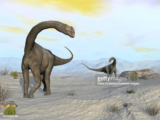 two brontomerus dinosaurs walking in the desert. - hadrosaurid stock illustrations, clip art, cartoons, & icons