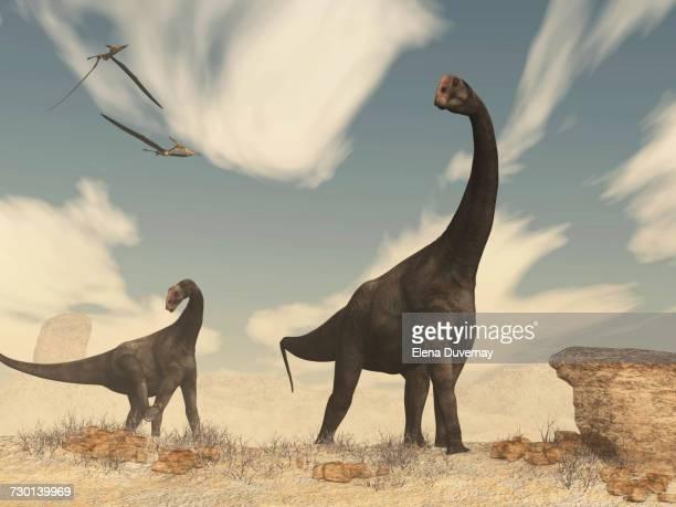 Two Brontomerus dinosaurs walking in the desert.